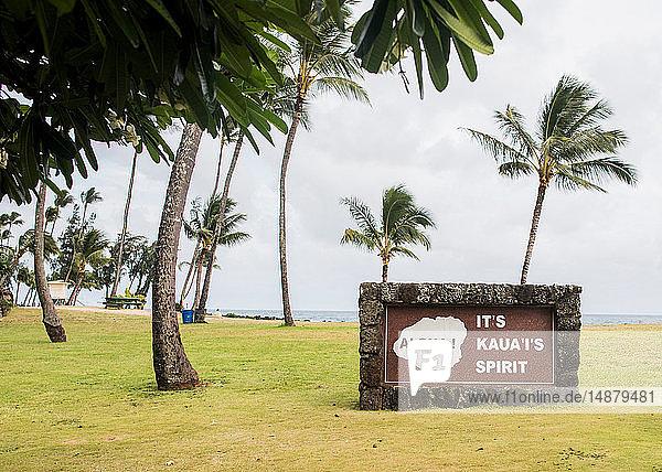 Windgepeitschte Palmen  Kauai  Hawaii