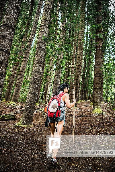 Wanderer auf dem Wanderweg des schlafenden Riesen  Kauai  Hawaii