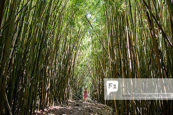 Hikers in bamboo forest  Waipipi Trail  Maui  Hawaii