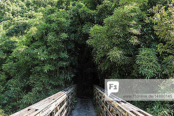 Holzbrücke zum Bambuswald  Waipipi Trail  Maui  Hawaii
