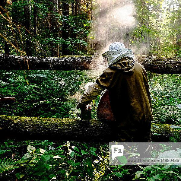 Beekeeper with bee smoker in forest  Ural  Bashkortostan  Russia