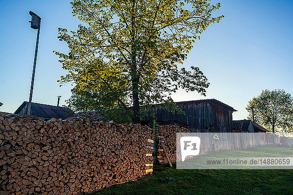 Stacks of firewood on farm  Ural  Sverdlovsk  Russia