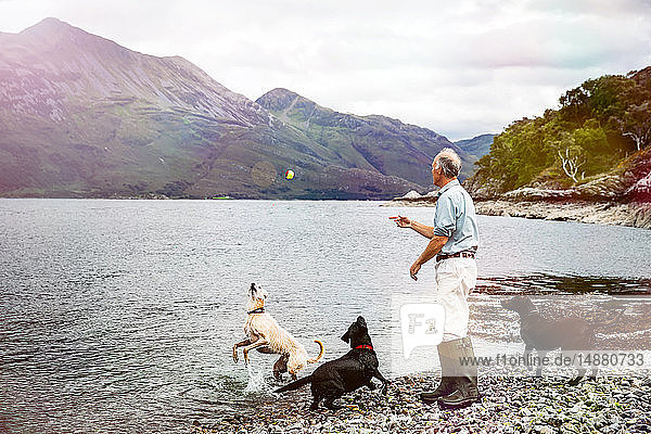 Senior man throwing ball into loch for dogs  Scottish Highlands