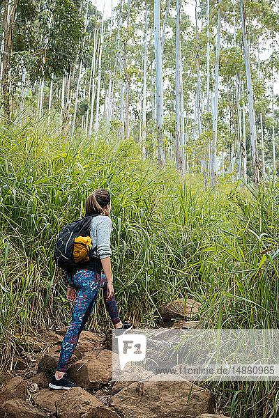 Wanderer erkundet Wald  Ella  Uva  Sri Lanka