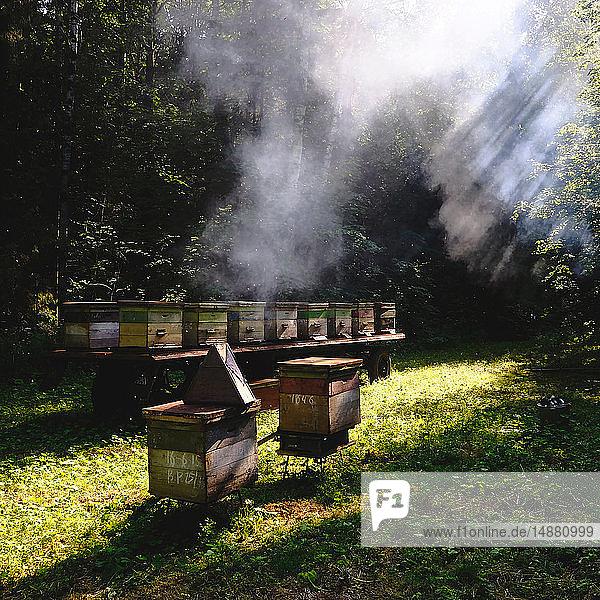 Beehive farm  Ural  Bashkortostan  Russia
