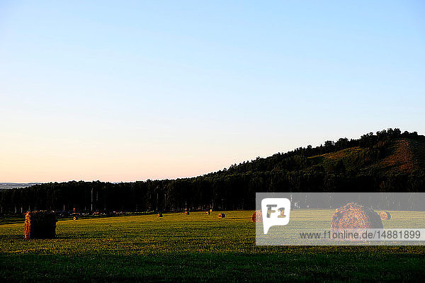 Field landscape with round harvested straw bales
