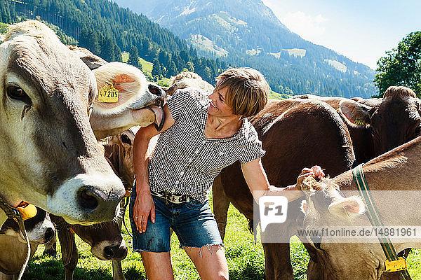 Frau verbindet sich mit Kuhherde auf dem Feld  Sonthofen  Bayern  Deutschland