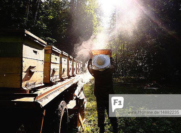 Beekeeper checking beehive against sunlight in farm  Ural  Bashkortostan  Russia