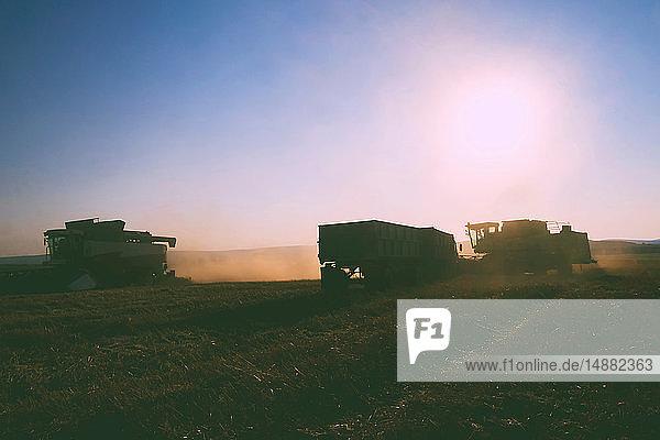 Feldlandschaft der Weizenfeld-Ernte mit Mähdrescher und Anhänger bei Sonnenuntergang