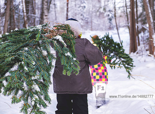 Boy and girl walking through snow covered forest carrying christmas tree  rear view