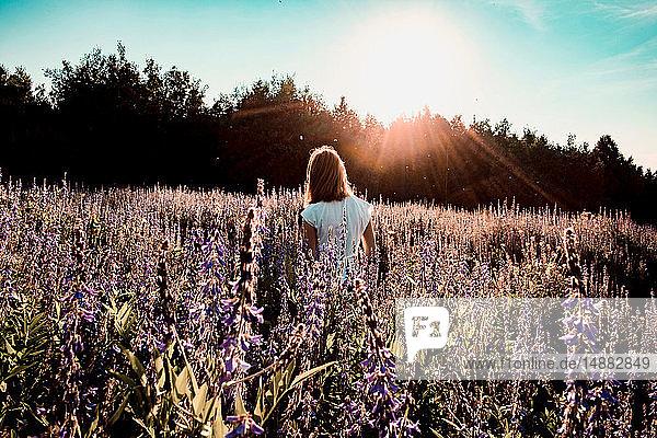 Frau schlendert durch ein Feld mit lilafarbenen Wildblumen  Rückansicht