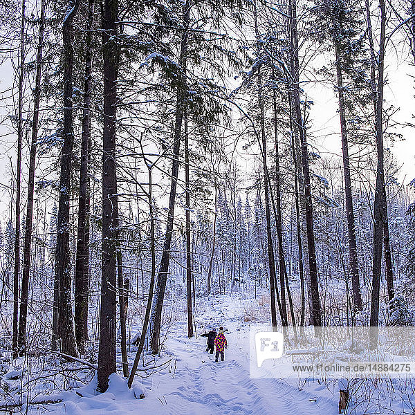 Boy and girl walking through snow covered forest  rear view