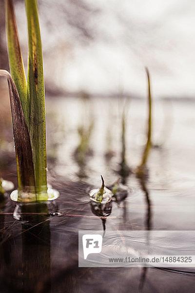 Wellen  Blasen und Wasserpflanzen auf der Seeoberfläche  flacher Brennpunkt  Ansicht der Oberflächenebene