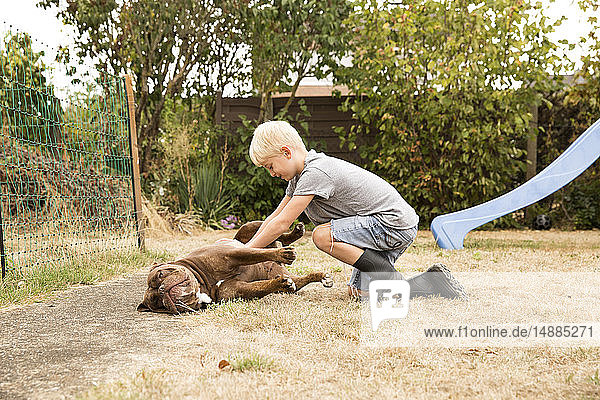 Junge streichelt Old English Bulldog auf Spielplatz im Garten