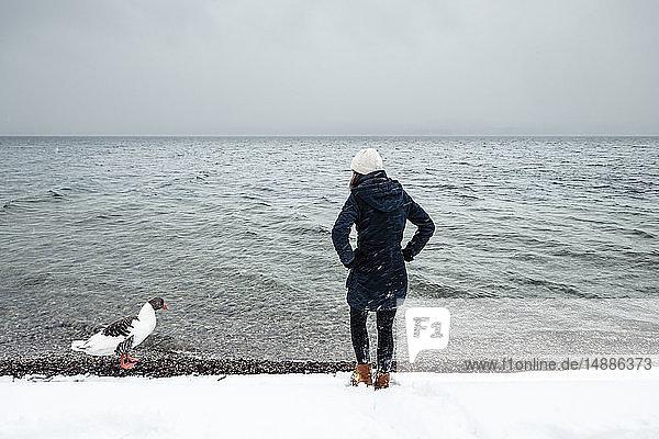 Graugans und junge Frau im Winter am Starnberger See
