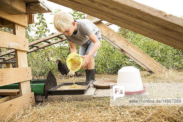 Junge füttert Huhn im Hühnerstall im Garten