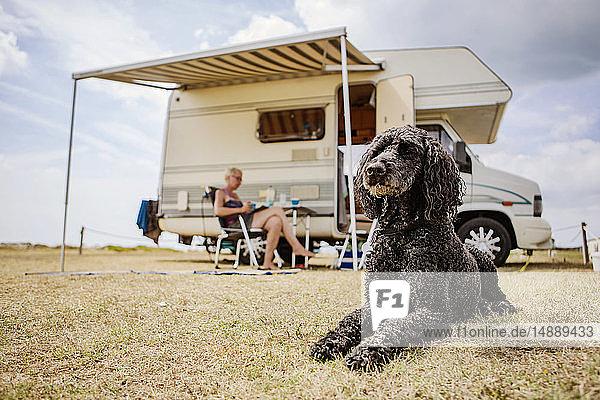 Aufmerksamer Pudel liegt auf dem Campingplatz vor dem Wohnmobil