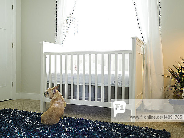 Dog sitting by cot