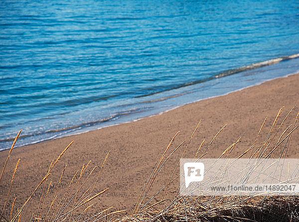 Seed heads by beach in Tromso  Norway