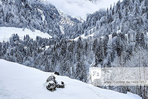 Austria  Biosphere Park Grosses Walsertal  Buchboden  mountain huts  forest covered with snow
