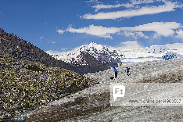 Couple and their dog backpacking across the Root Glacier with crampons on during summer  Wrangell Mountains  Wrangell-St. Elias National Park  South-central Alaska; Kennicott  Alaska  United States of America