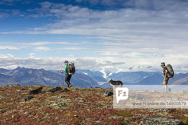 Man and woman backpacking on the tundra with a dog on the Kesugi Ridge Trail  Denali State Park  South-central Alaska; Alaska  United States of America