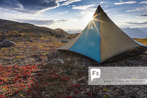 Tent pitched on the tundra  early evening with sun coming from behind it  along the Kesugi Ridge Trail  Denali State Park  Alaska in the autumn  South-central Alaska; Alaska  United States of America