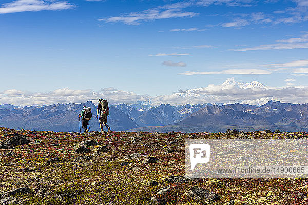 Man and woman backpacking on the autumn coloured tundra on the Kesugi Ridge Trail  Denali State Park  South-central Alaska; Alaska  United States of America