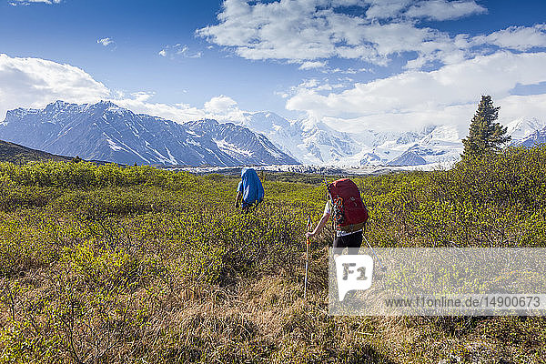 Man and woman backpacking on a sunny  summer day through brush on the Donoho Lakes Loop  with Wrangell Mountains and Kennicott Glacier in the background  Wrangell-St. Elias National Park South-central Alaska; Kennicott  Alaska  United States of America