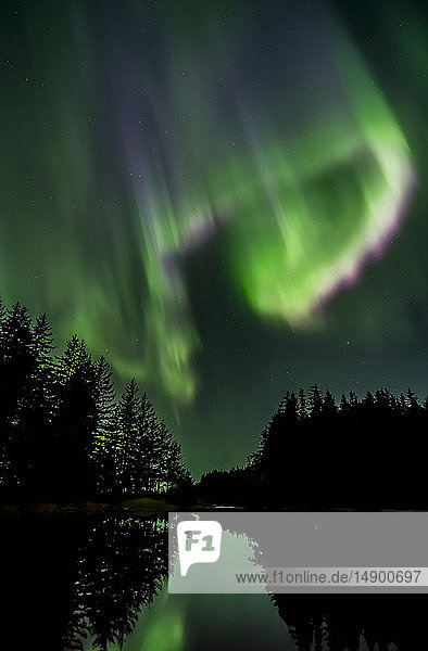 Northern Lights  Tongass National Forest  near Juneau; Alaska  United States of America