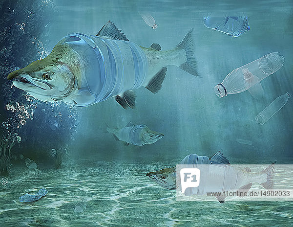 Fish and plastic water bottles underwater  composite image