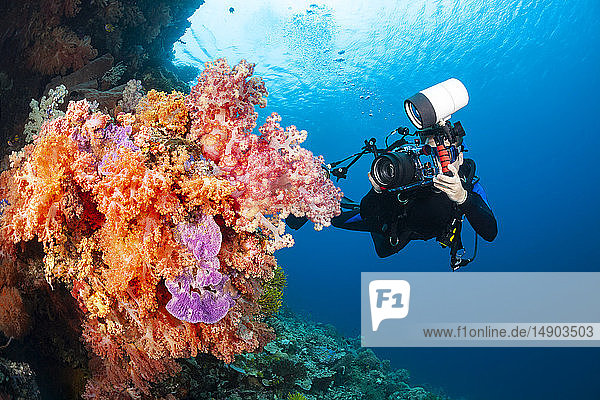 A photographer lines up with a SLR in a housing with a macro lens to shoot soft coral detail; Indonesia