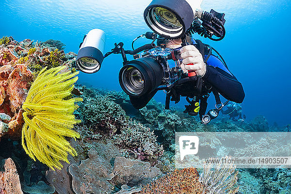 A photographer lines up with a SLR in a housing with a macro lens to shoot detail on this crinoid; Indonesia