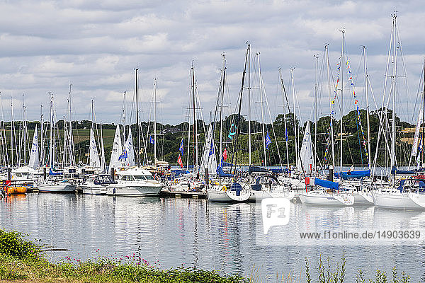 Sailboats in a harbour for boat racing; Cobh  County Cork  Ireland