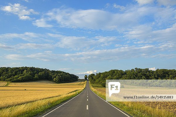 Country road with grain fields in summer  Sternberg  Grabfeld  Bavaria  Germany.