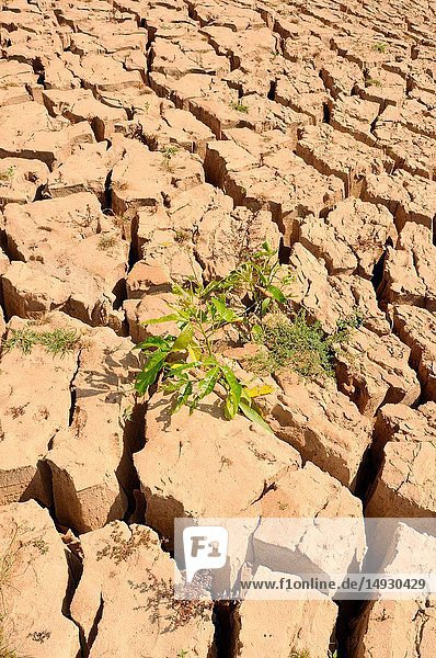 A plant growing in the dry earth at the Mekong River in North Laos.