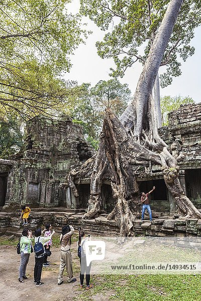 Cambodia  Angkor  Preah Khan Temple and tree.