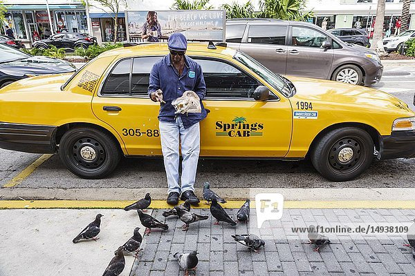Florida  Miami Beach  Black  man  taxi cab driver feeding pigeons