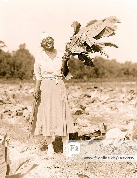 African American Woman Holds Tobacco Leaves