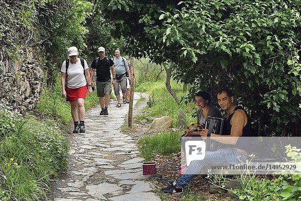 Italy  Liguria  World Heritage Site  Cinque Terre National Park  Hikers and musicians near Corniglia.