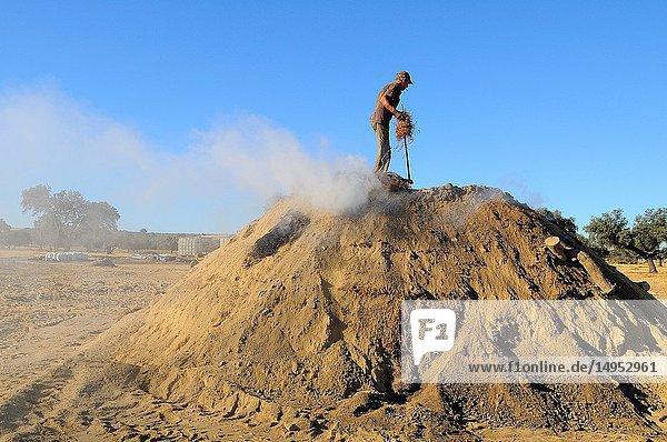 Artisanal elaboration of charcoal. Sierra de San Pedro natural reserve. Badajoz province. Extremadura. Spain