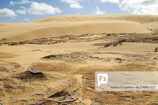 Te Paki sand dunes  Northland  New Zealand.