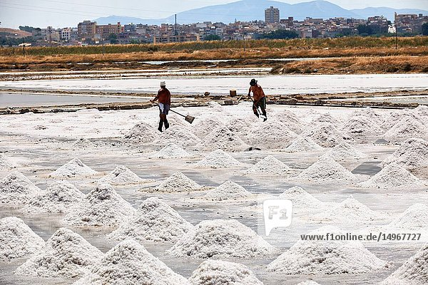 Pictures & images of Men collecting and digging salt in a salt pan on the outskirts of Trapani  Sicily.