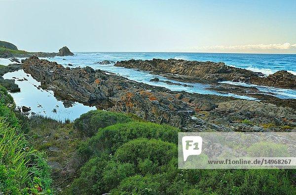Coast of the Tsitsikama National Park  South Africa
