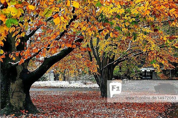 Park scene in winter  Park de Budé  Petit Saconnex  Geneva  Switzerland  Europe