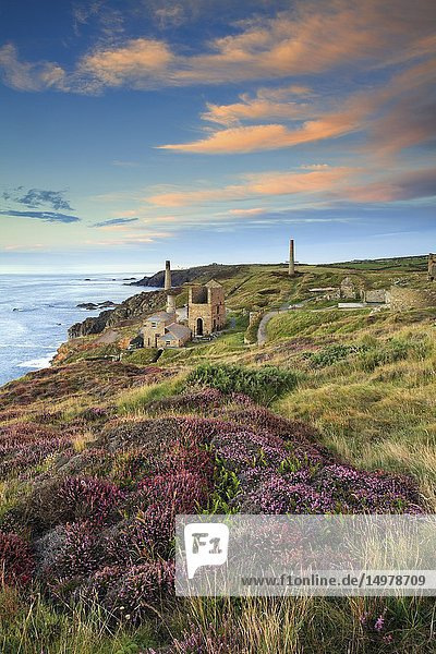 The Engine Houses at Levant in West Cornwall  with Pendeen Watch lighthouse in the distance. The image was captured at sunset in late August when the heather was in bloom.