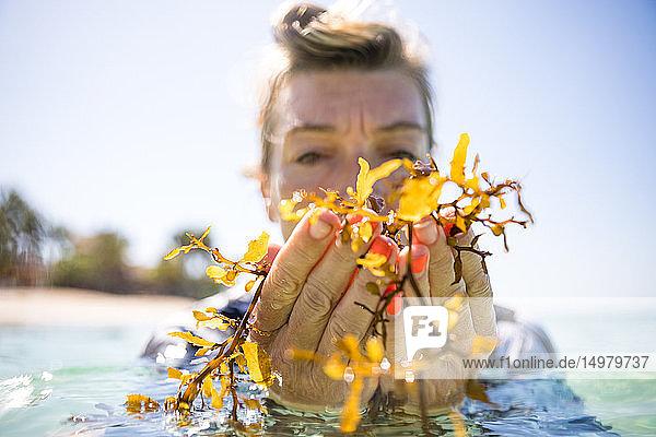 Frau mit einer Handvoll Seetang im Meer  Pagudpud  Ilocos Norte  Philippinen