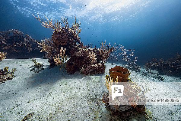 Szenische Unterwasser-Ansicht des Korallenriffs  Eleuthera  Bahamas