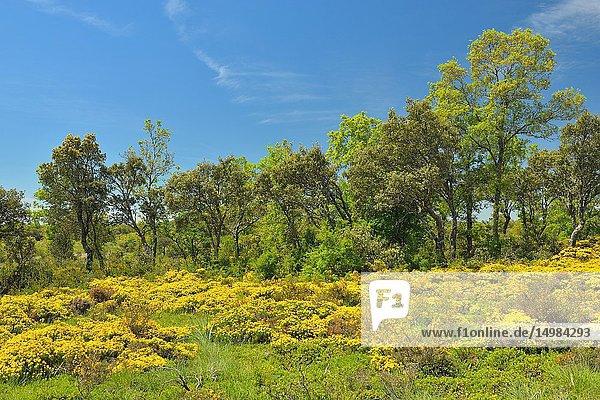 Spring in Páramo de Masa  Burgos Province  Castile-Leon  Spain