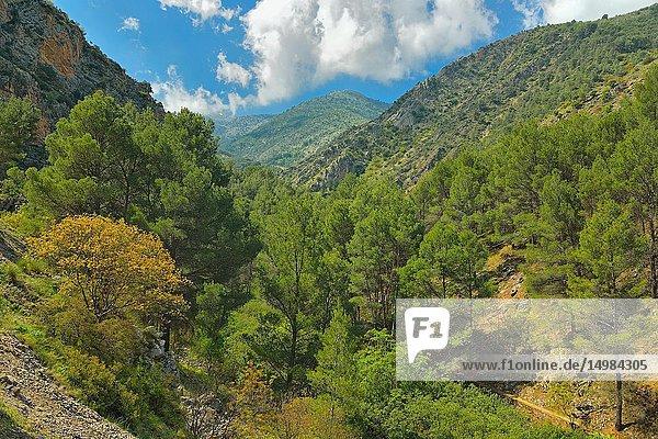 River Bedmar Valley  Sierra Mágina  Jaen province  Andalusia  Spain